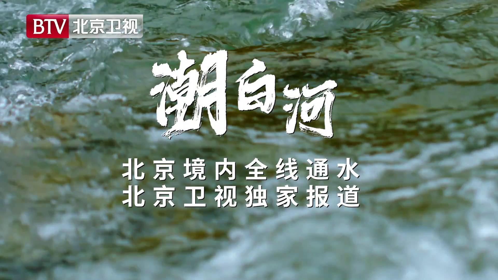 一条大河波浪宽!北京卫视独家报道:潮白河北京段22年来全线通水!